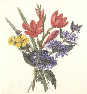 Schizoslylis major, Potentilla, Katherine Dykes and Caryopteris (w/c on paper)