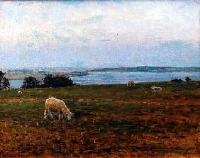Sheep Grazing, Osterby, Skagen (oil on canvas)