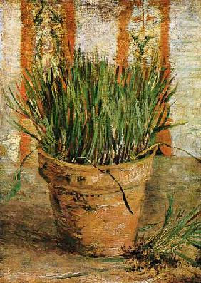 van Gogh, Vincent : Flowerpot with chives