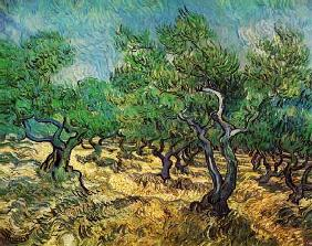 van Gogh, Vincent : The Olive Grove