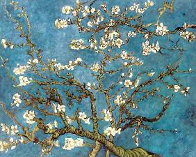 van Gogh, Vincent : Almond Blossoms (copy)