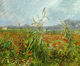 van Gogh, Vincent : Green Grain Stalks