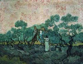 The Olive Pickers, Saint-Remy