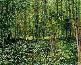 van Gogh, Vincent : Woods and Undergrowth