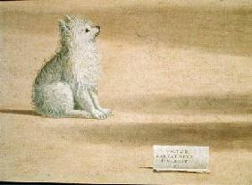 Vision of St. Augustine, detail of the dog