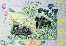 Mountain Gorillas (month of March from a calendar)