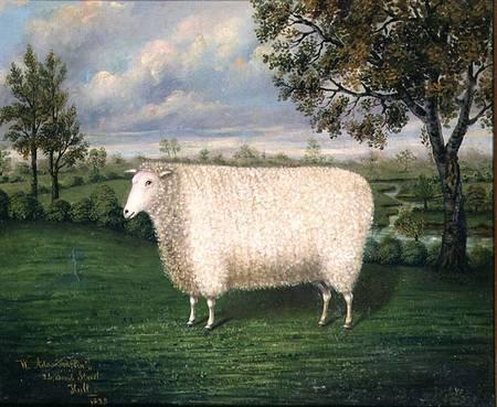 w  adamson   a prize sheep