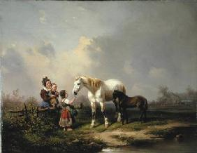 Feeding the Mare and the Foal
