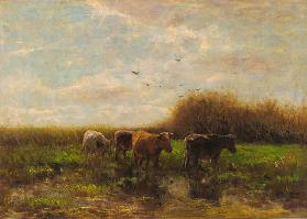 Cows at evening