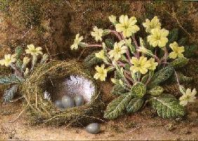Still Life of Eggs in a Nest and Primroses