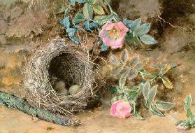 Wild Roses and Birds' Nests