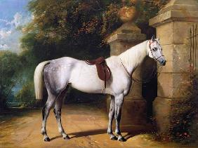 A Grey Horse by Park Gates