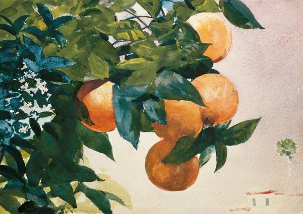 Homer, Winslow : Branch with oranges